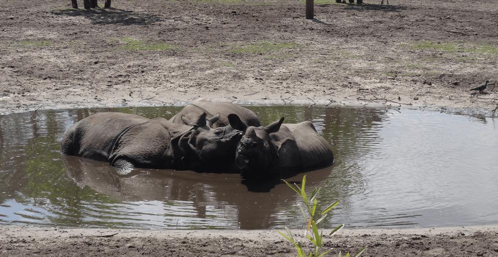 zoo-bassin-arcachon