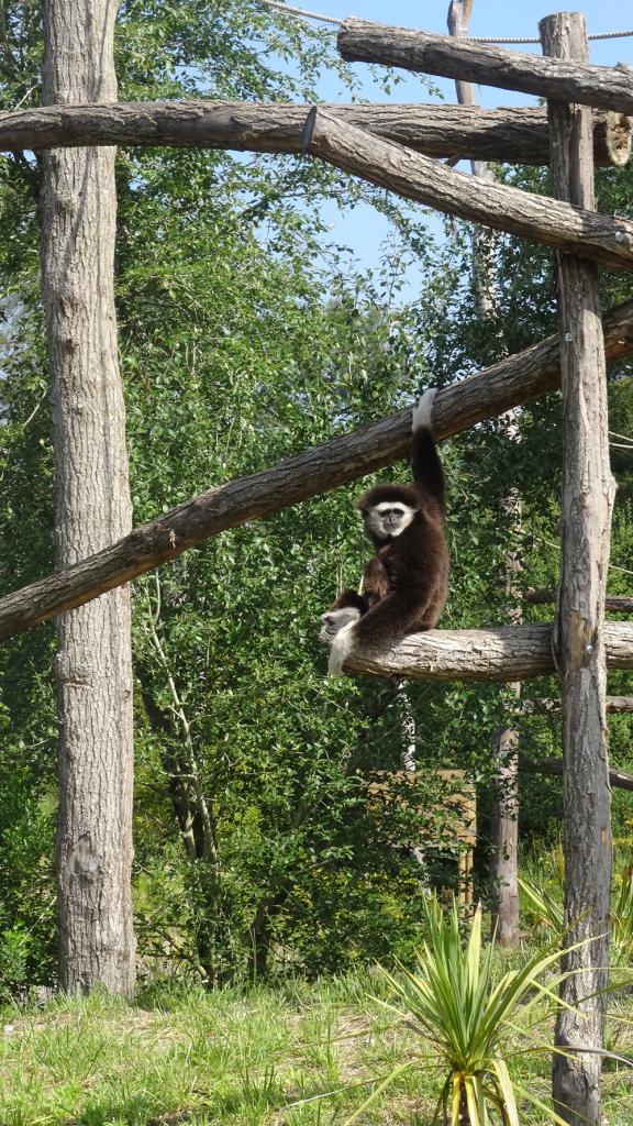 Singe-zoo-du-Bassin-Arcachon
