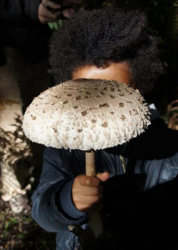 cueillette-champignons-bassin-arcachon